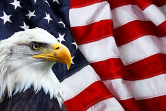 north-american-bald-eagle-american-flag-background-49007174.jpg